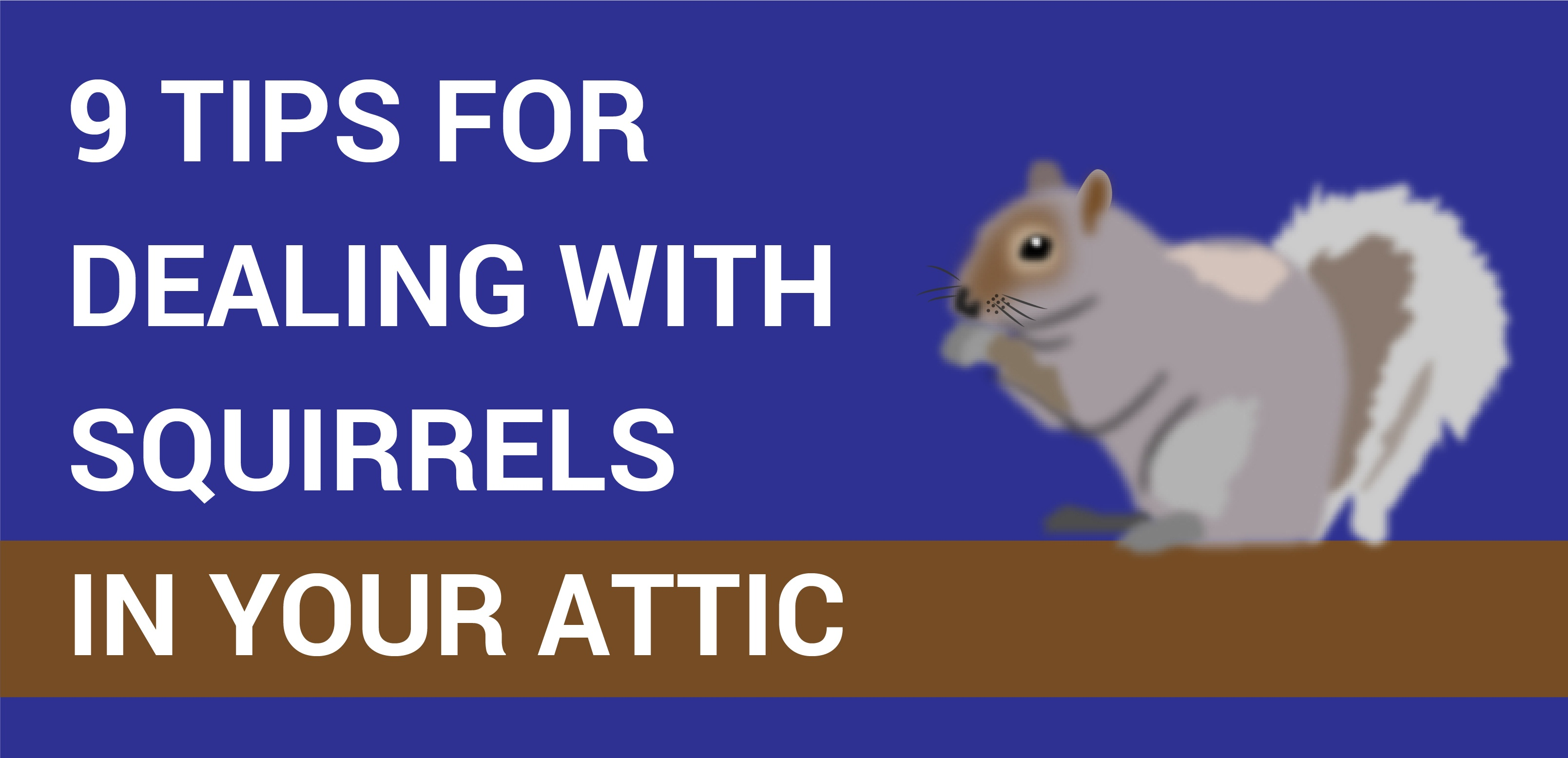 How to Get a Squirrel out of your attic