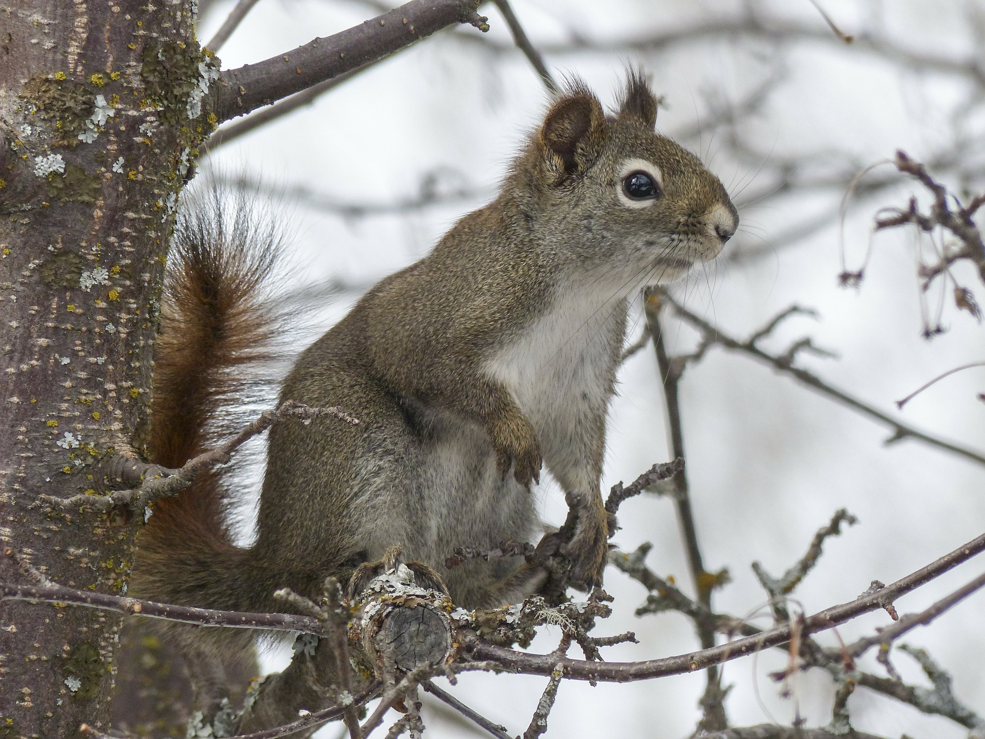 squirrel-300223_1920.jpg